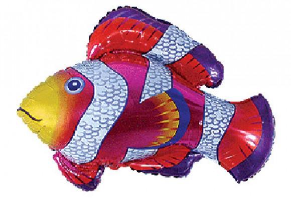 248 Nemo Fish